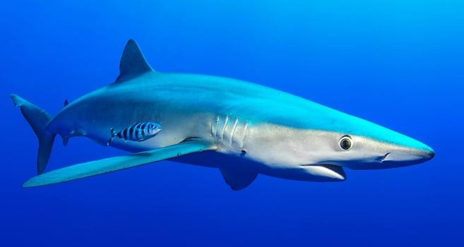 kostenlos automatenspiele mit shark