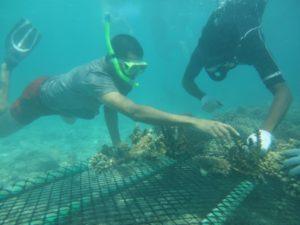 Kurumba gibt gefährdeten Korallen ein neues Zuhause