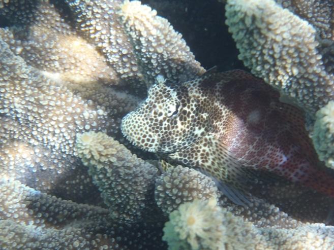 Unterwasserwelt in Tonga