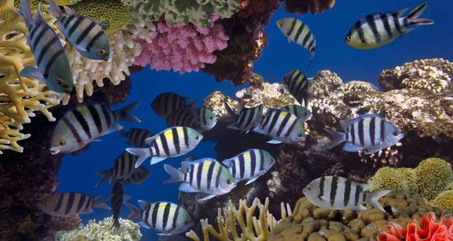 Insel Andros in Bahamas