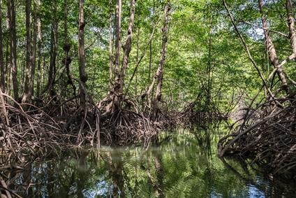 Schnorcheln durch die Mangrovenwälder von Bonaire