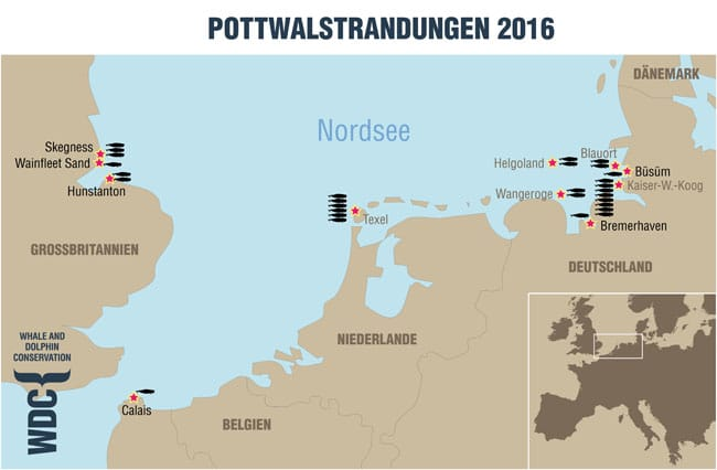 Pottwalstrandungen 2016