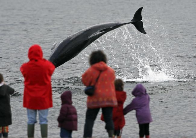 Wale und Delfine beobachten