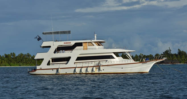 Sheena: Spektakuläre Malediventour zu den Manta- und Walhaispots