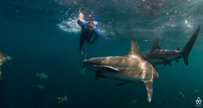 Hai-Expedition in Südafrika