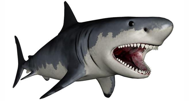 Der Größte Hai