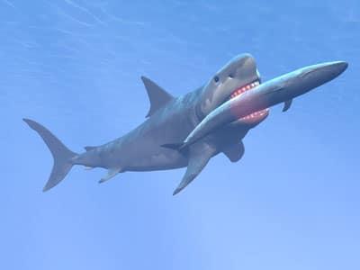 Megalodon mit Blauwal im Maul