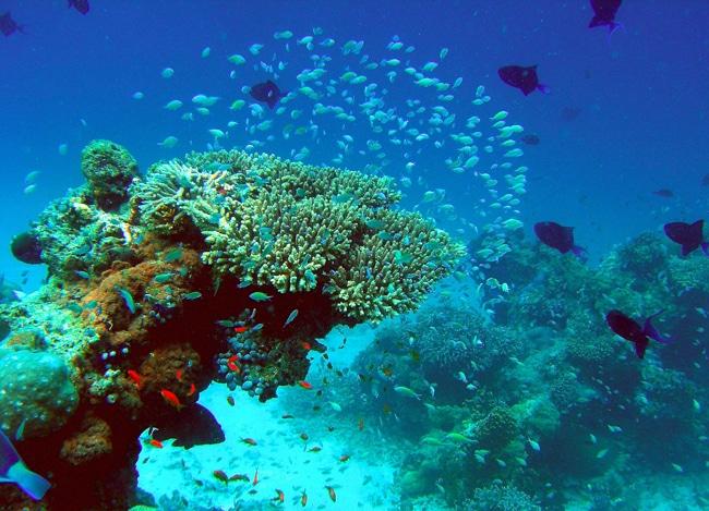 FesduReef Velassaru Maldives