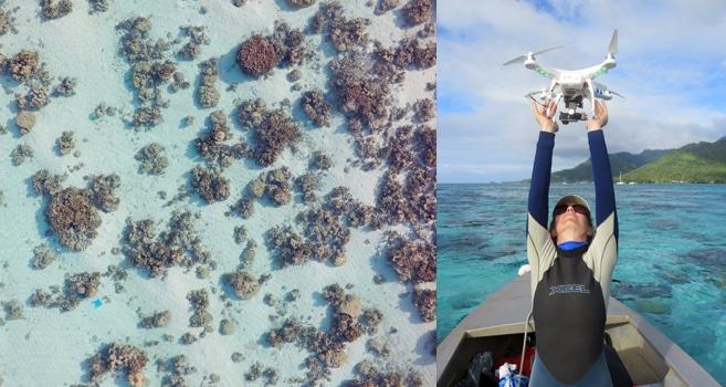 Drohnen im Einsatz für die Korallenriffforschung