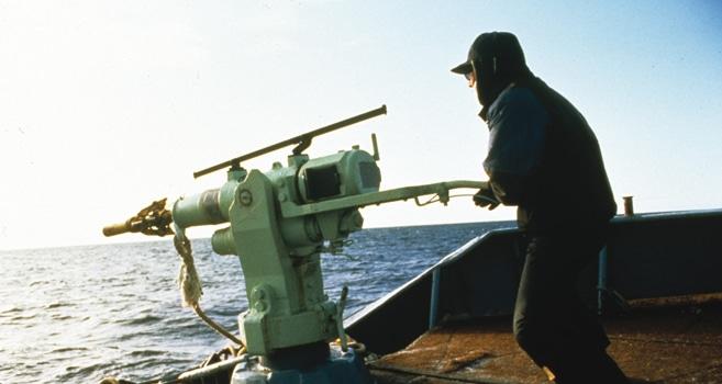 Japan stellt neue Walfangstrategie vor