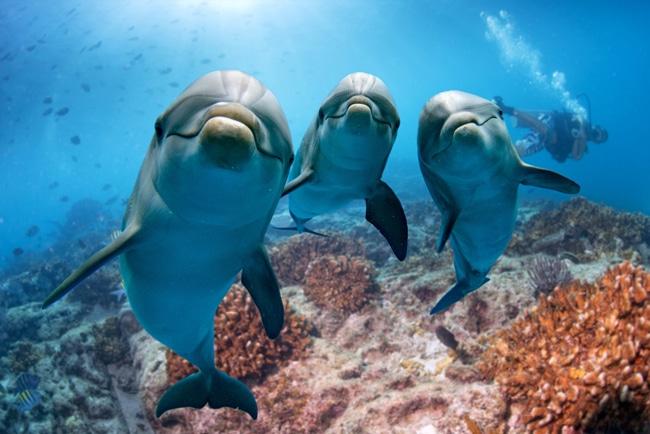 Delfin Arten und Lebensraum