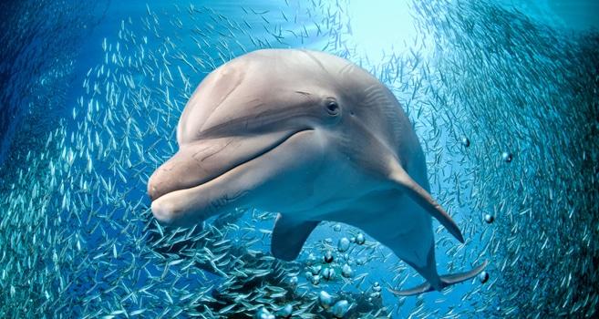 delfine steckbrief 252ber lebensraum nahrung arten etc