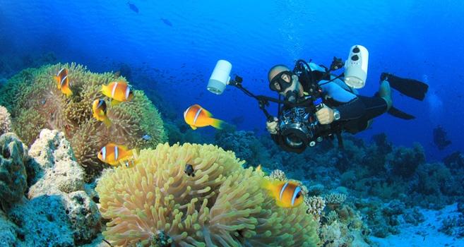 20 Anfängertipps für die Unterwasserfotografie