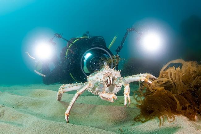 Unterwasserfotografie für Einsteiger