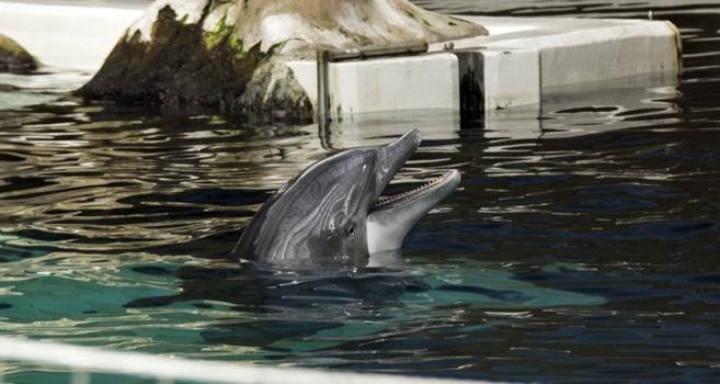 WDC fordert die sofortige Einstellung der Delfinzucht im Delfinarium Duisburg