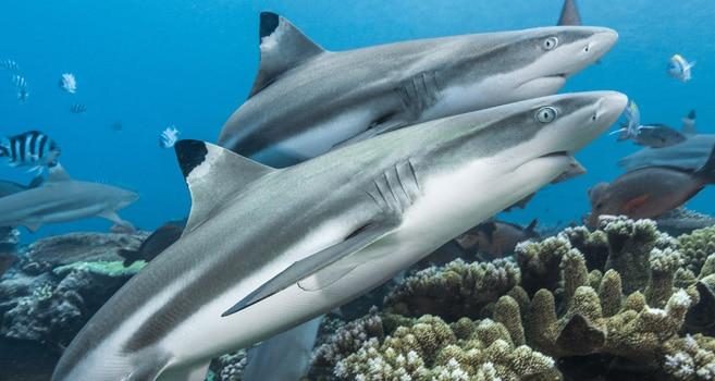 Faszination Haie: Eine Fotoausstellung im Haus der Wissenschaft zeigt atemberaubende Nahaufnahmen
