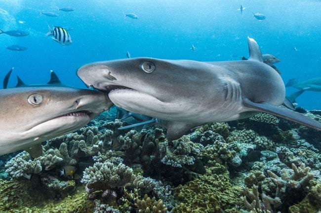 Fotoausstellung von Haien
