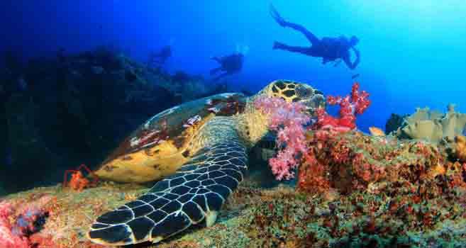 Anantara Island Resorts: Unterwasserabenteuer in Mosambik